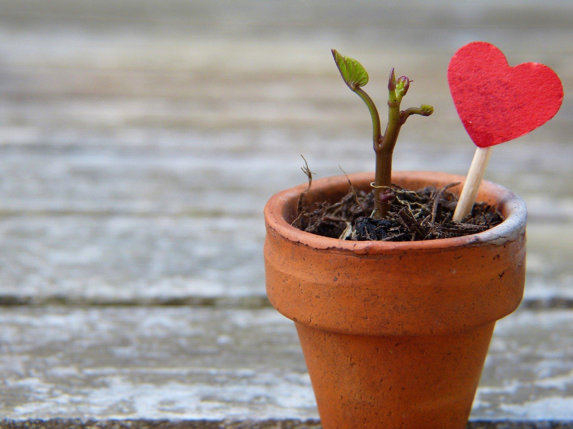 Plantje met hartje