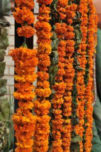 Bloemen India
