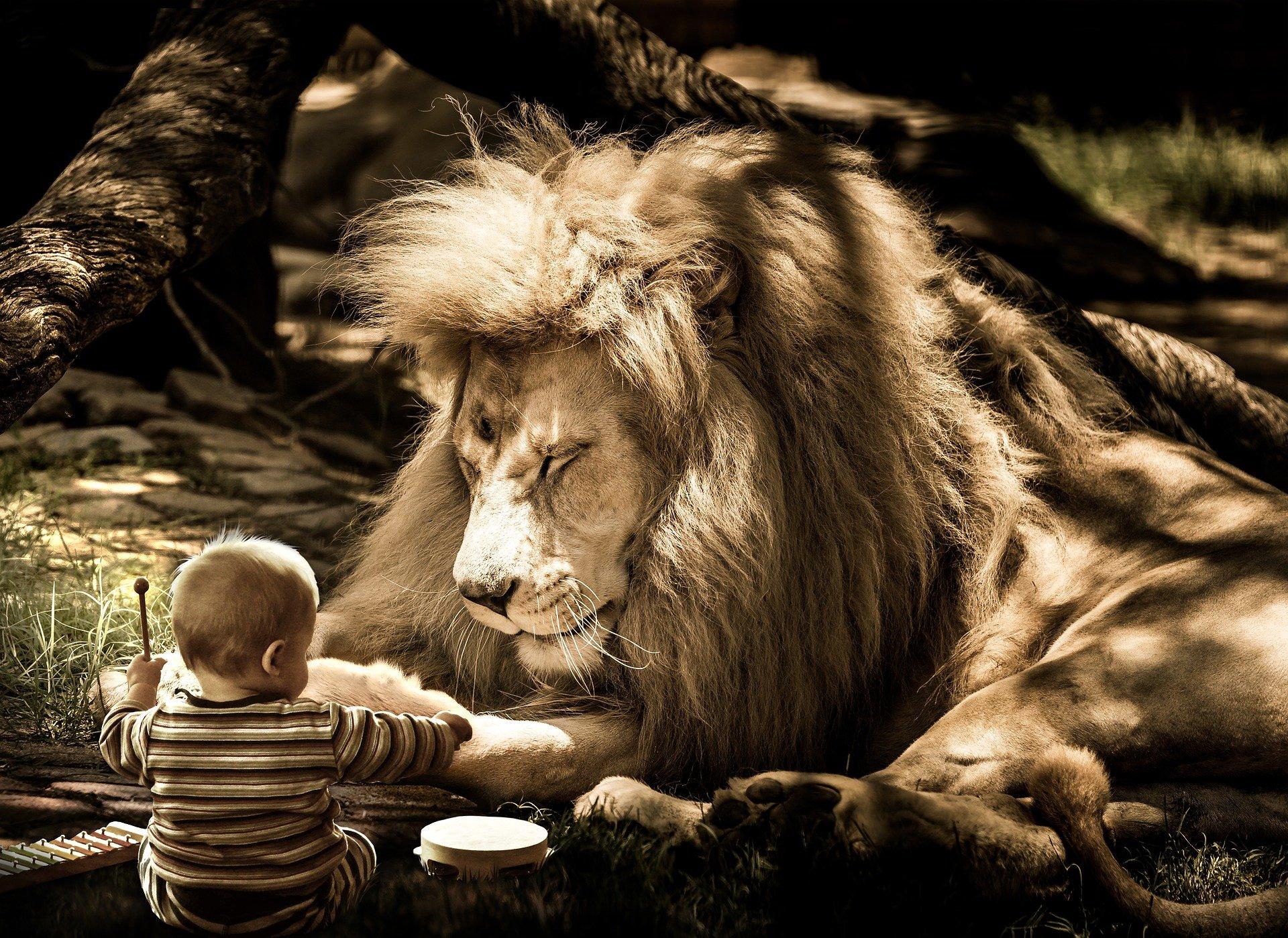 Luisteren leeuw baby